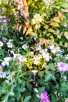 Chelsea Flower Show | Garden lighting | Collingwood SL030 http://www.collingwoodlighting.com/en/products/spike-lights/item/sl030-uk