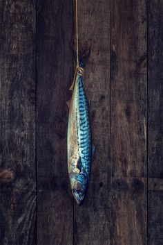 A fresh Mackerel hanging against a rustic wooden background. Food Photography by Louis Neville.