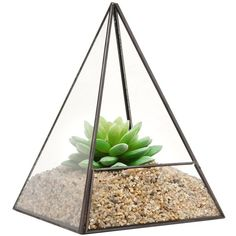 Modern Glass Pyramid Tabletop Succulent Plant Terrarium Box Air Plant... (245 MAD) ❤ liked on Polyvore featuring home, home decor, floral decor, plants, fillers, fillers - green, flowers, modern home decor, mod home decor and glass terrarium