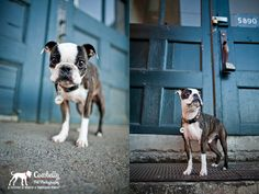 Pretty background for dog photos.  Photo by Cowbelly Pet Photography. http://www.cowbelly.com