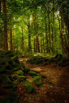 Enchanted Forest on 500px by Warren Swales England