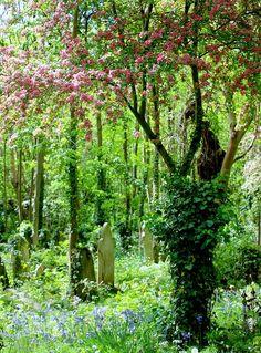 highgate cemetery spring by Irene Butcher