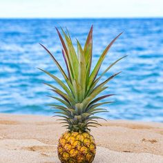 The Salty Pineapple Shop