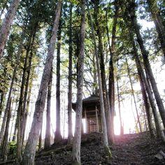 裏山。 Iwate