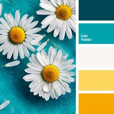 Pastel turquoise basic background elevates smoky whiteness which does not prevail. Tangerine color is like a dessert on a two-by-twice table.