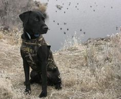 Gun Dog Training Tips: How to Teach a Dog to Stay