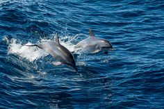 Exhilaration Photo by Alan Deakins — National Geographic Your Shot Common Bottlenose Dolphin, Complex Systems, Fishing Equipment, National Geographic Photos, Fishing Boats, Dolphins, Conservation, Mammals, Amazing Photography