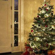 Ha makulátlanul tiszta ruhát szeretnél, használd a sütőpor erejét! Eláruljuk, hogyan. Christmas Tree, Holiday Decor, Home Decor, Teal Christmas Tree, Decoration Home, Room Decor, Xmas Trees, Christmas Trees, Home Interior Design