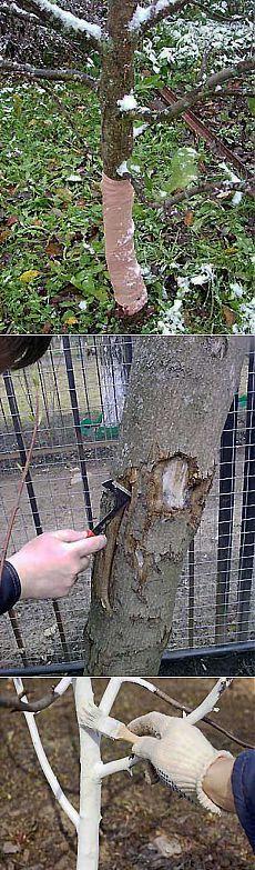 Осенняя обработка сада. Чем опрыскивать деревья осенью.   Мое подворье