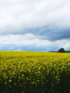 Landscape in yellow and blue
