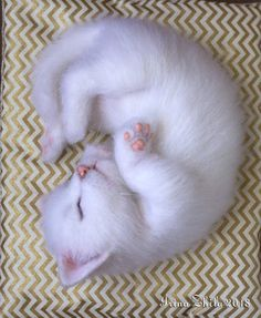 Sleeping kitten By Irina Zhila - The kitten is approximately 20 cm tall, it is weighted with a mineral granulate, its feet and tail have a wire frame inside.This needle felted toy is made of 100% wool. Its paw pads and nose are made of polymer clay, they are as real and very pleasant for touching. This ba...