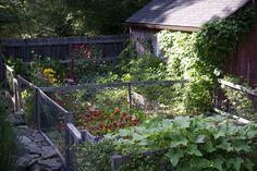 Vegetable garden Laura Silverman ; Gardenista