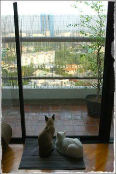 タイ猫 カオマニー シャム猫 Khaomanee Siamese cat แมวไทย ขาวมณี วิเชียรมาศ Antique Thai Cats アンティークタイキャット