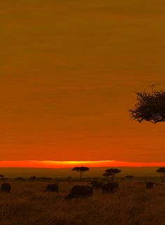 Savannah at dawn by Aki Kanamori, via 500px - Masai Mara, Kenya.
