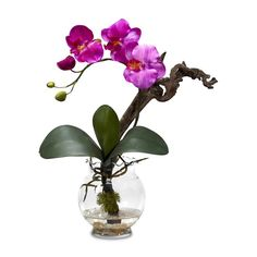 Cute in a bathroom. Mini Phalaenopsis with Fluted Vase