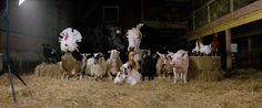Animales de la granja, Rob MacInnis. http://www.phmuseum.com/robmacinnis/photo/150338
