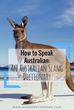 How to Speak Aussie: A Guide to Australian Slang