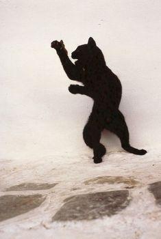 dancing black cat