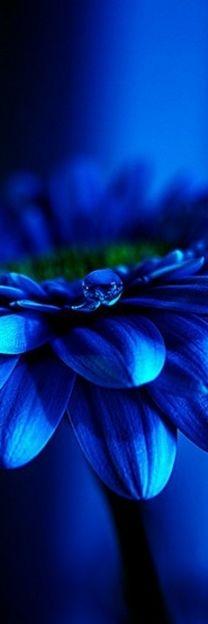 blue.quenalbertini: Blue color