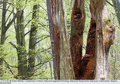 Totholz, Naturschutzgebiet Rohrberg, Naturpark Bayerischer Spessart, Unterfranken, Bayern, Deutschland