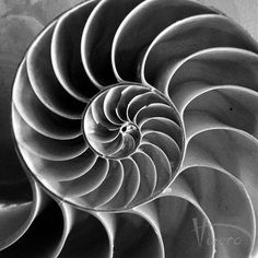 The Golden Ratio in all its elegance.