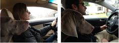 My wife believes she is a better driver, I let our dog decide - Imgur