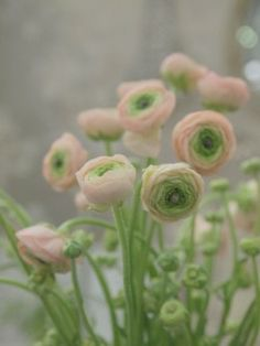 Ranunculus my number 1. (I'm glad someone knows the name to flowers because I terrible at remembering them. So now I have Pinterest to remember them for me)