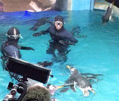 Swimming with penguins at Ski Dubai.