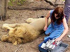 """Kate Nicholls """"The Lion Children"""""""