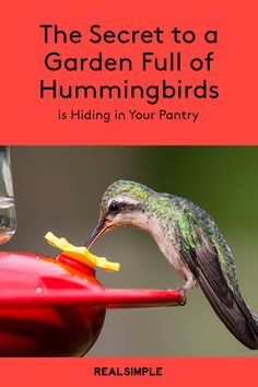 Homemade Hummingbird Food Discover The Secret to a Garden Full of Hummingbirds Is Hiding in Your Pantry And its pretty sweet. How To Attract Birds, How To Attract Hummingbirds, Attracting Hummingbirds, Sugar Water For Hummingbirds, Homemade Hummingbird Food, Recipe For Hummingbird Nectar, Hummingbird Feeder Recipe, Hummingbird Plants, Hummingbird House