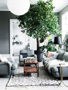Living room with gray walls, a large indoor plant,  and a gray sofa with matching armchairs