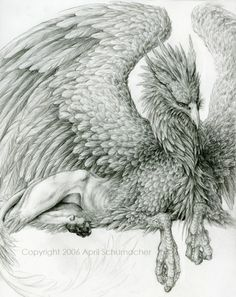 Griffin by April Schumacher_pencil Griffon Tattoo, Theme Halloween, Illustration, Mythological Creatures, Magical Creatures, Fantastic Beasts, Dragons, Faeries, Amazing Art