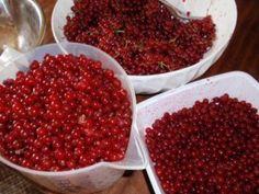 Sirup z drobného ovocia - obrázok 1