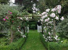 English rose pergola