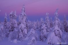 finland   Forest in Finland.