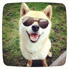 (via 今さらながらLINEカメラで遊んでみたり #shiba #dog #柴犬)
