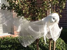 The Ghost was made from cheesecloth glued to a styrofoam head from Hobby Lobby. The head was painted with glow in dark paint and the eyes were painted black.:
