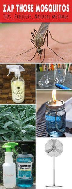 Zap Those Mosquitos Tips, Ideas