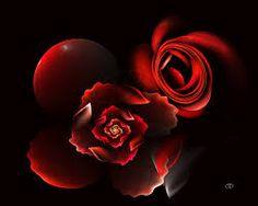 """Résultat de recherche d'images pour """"rose rouge"""""""