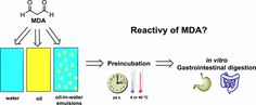 Reactivity of Free Malondialdehyde during In Vitro Simulated Gastrointestinal Digestion