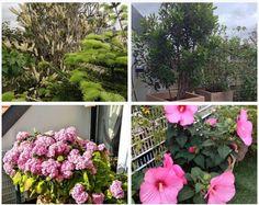 Quelles plantes pour des pots d'extérieur XXL