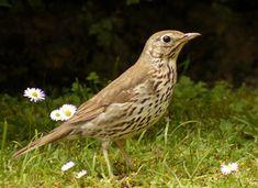 Identifier les oiseaux des parcs et des jardins au printemps et en été