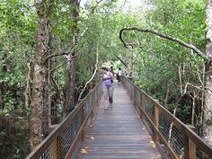 Marrdja Boardwalk - Take a Stroll Through Time in the Daintree Rainforest Daintree Rainforest, Garden Bridge, Stairs, The Incredibles, Outdoor Structures, Stairway, Staircases, Ladders, Ladder