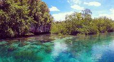 Colours of Raja Ampat, Papua ❤️ #green #blue #sea #mangrove #rajaampat #nature #papua #indonesia #traveltheworld by trav3ltheworld. indonesia #amazing #beautiful #wanderlust #colours #instatravel #goexplore #views #ocean #bikini #tan #green #travelgram #island #nature #mangrove #explore #travel #blue #traveling #rajaampat #papua #traveler #traveltheworld #explorer #love #asia #sea