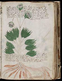 Manoscritto Voynich - Wikipedia