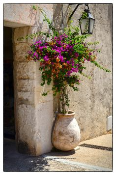 Bouganvilla in pot against stone wall and beautiful lantern