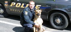 """Quote from the bio """"Best friend of the force, Chico is Westlake Police Department's star canine: A Belgian Malinois (just like our previous dogs, Floppy and Jaro)."""" ROTFL!! That is NOT a Malinois...it is a Beautiful Pit Bull  OOPS!!!"""