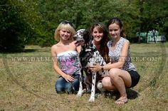 http://dalmatian-dog-breed-store.com/  #dalmatian #girl #photography