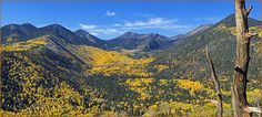 Flagstaff- Where people who live in Phoenix go to escape the summer hear!