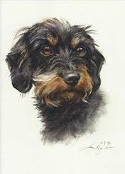 Dachshund Clube Wire Haired Dachshund, Dachshund Art, Kinds Of Dogs, All Dogs, Dogs And Puppies, Dog Paintings, Pencil Drawings, Dog Drawings, Dog Photos